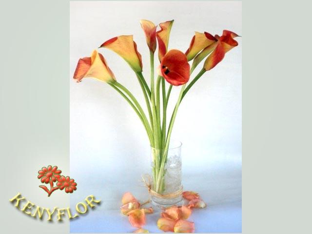 CALAS ARREGLOS EN FLOREROS Arreglos Florales KenyFlor